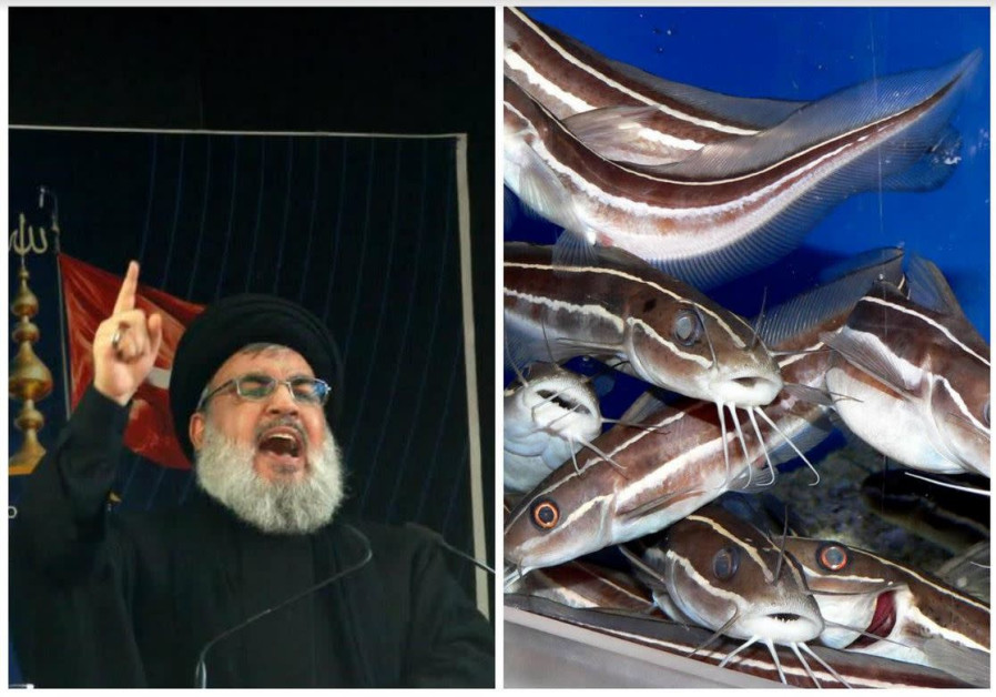 Israel reports success in fighting 'Nasrallah,' toxic fish invader