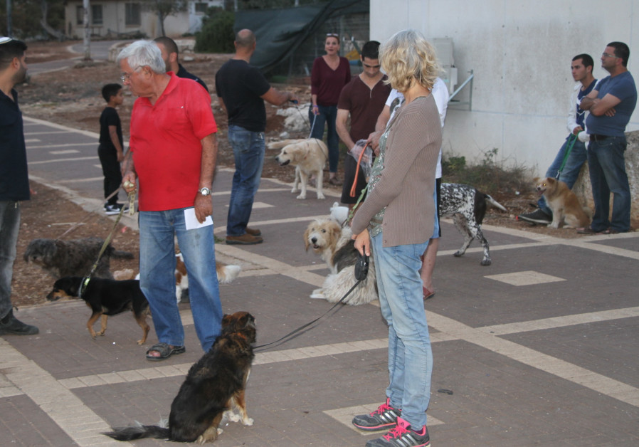 Residents of Gan Ner in the Gilboa Regional Council wait to have their dogs vaccinated after a rabid dog ran wild through the neighborhood