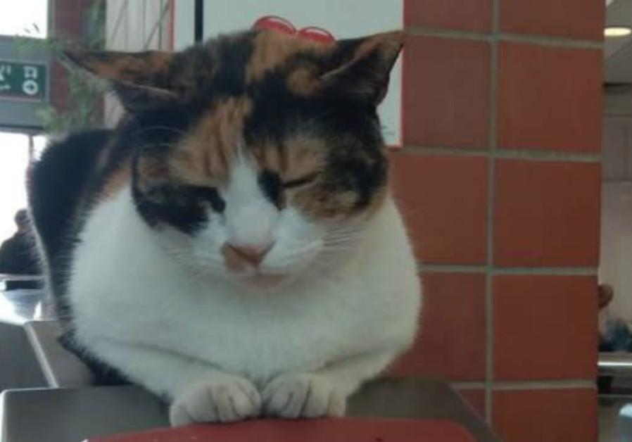 Calico cat Mitzi