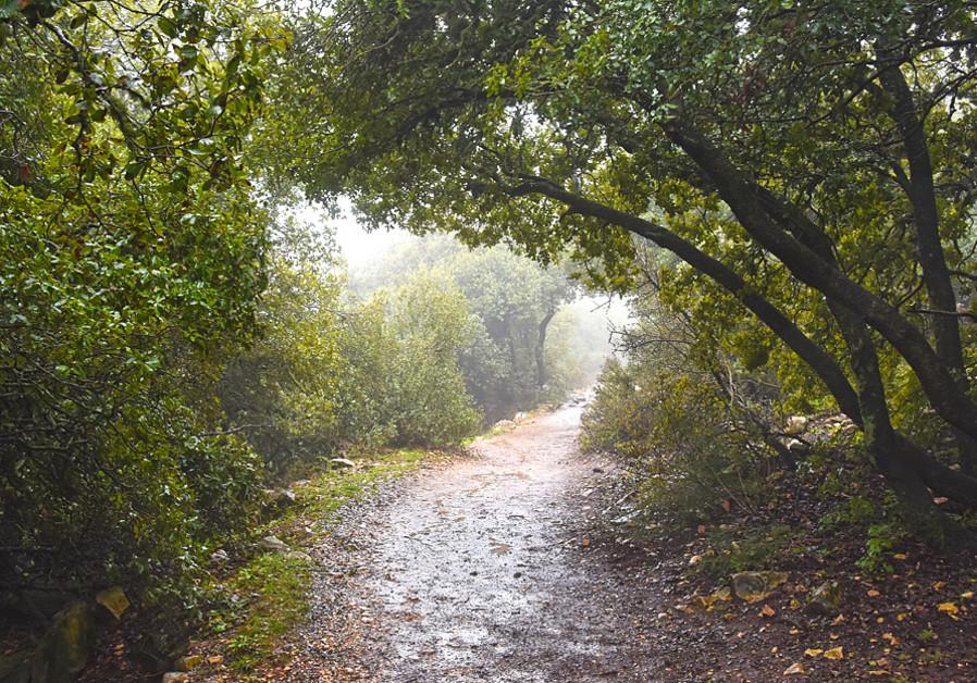 Pisga Trial - Mount Meron (Itsik Marom)