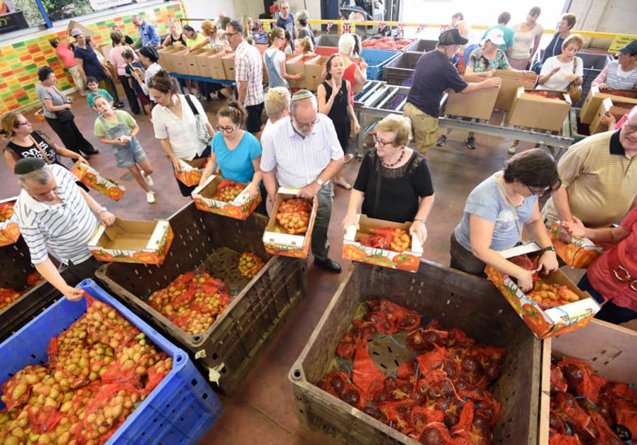 Volunteers at Leket Israel's logistics center