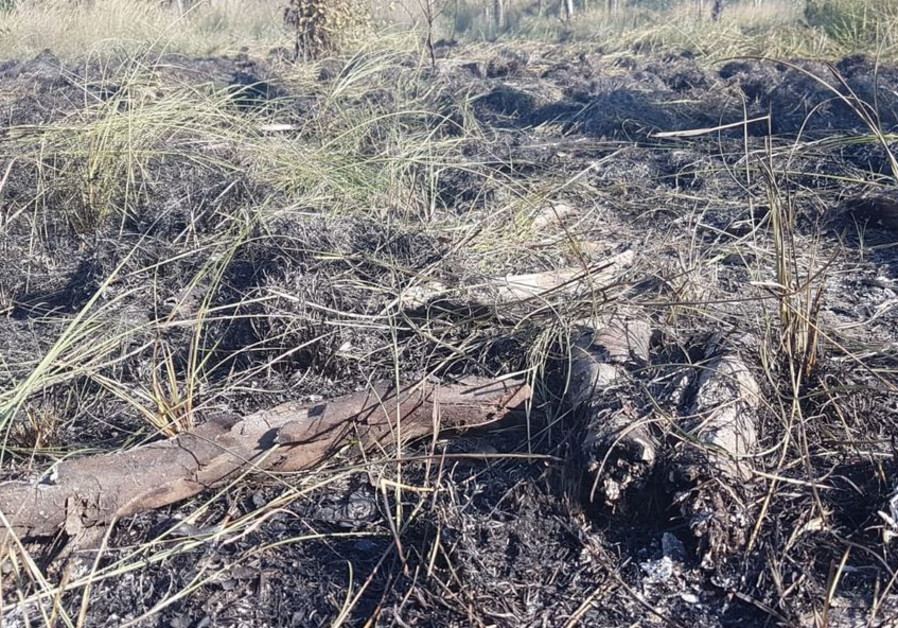 Beeri forest burns after Hamas incendiary balloon attack