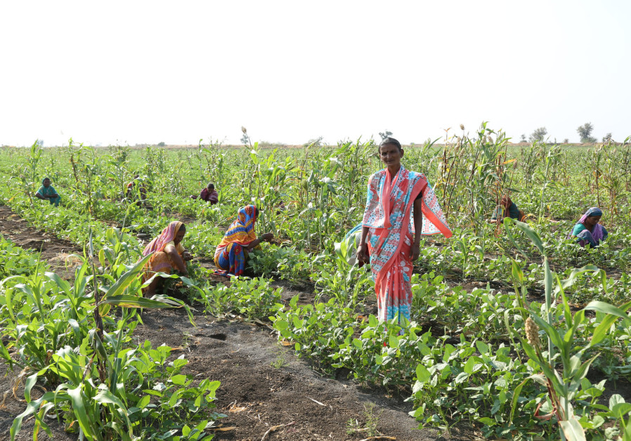 Farmers at work in Rhamtal, India, after the completion of Netafim's community irrigation project