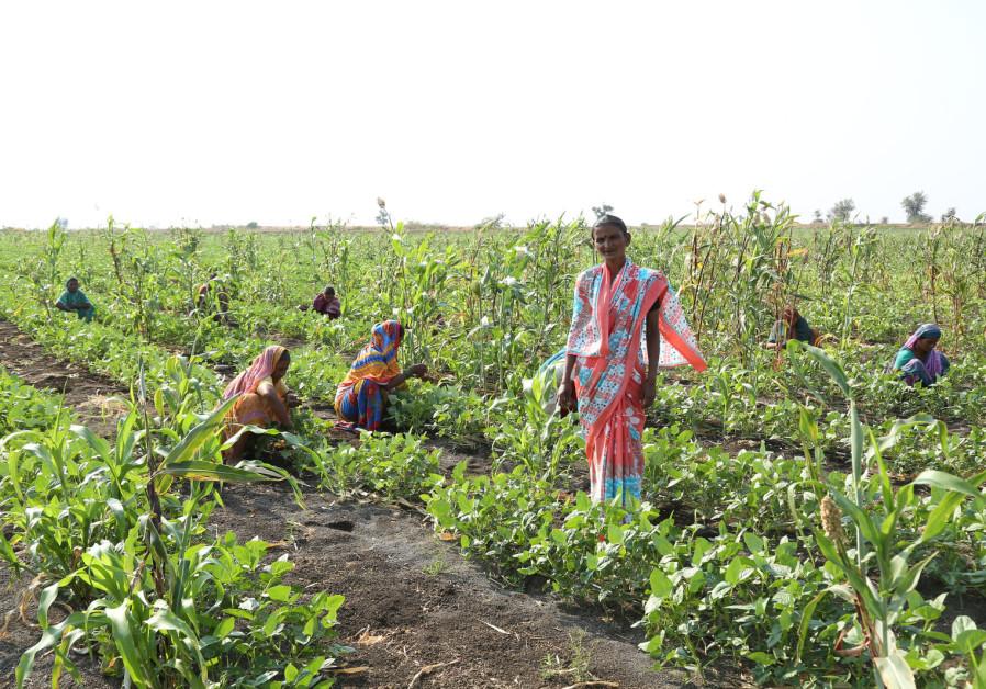 חקלאים בעבודה ב - Rhamtal, הודו, לאחר השלמת פרויקט ההשקיה הקהילתית של נטפים