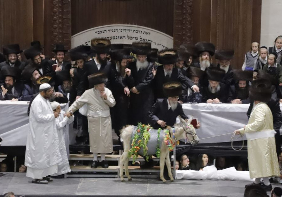 Hassidic Jews perform the rare mitzvah of Petter Chamor