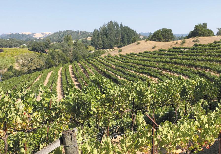 The famed Warnecke vineyard in Alexander Valley, Sonoma. (Courtesy)