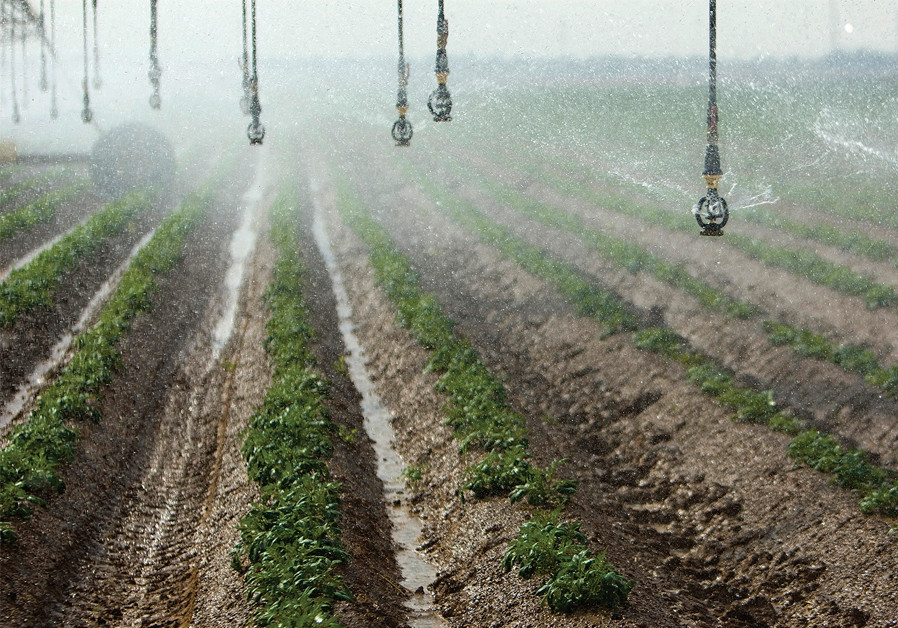 AN IRRIGATION system sprays recycled waste water on a field in Kibbutz Magen in southern Israel. ( Credit: AMIR COHEN/REUTERS)