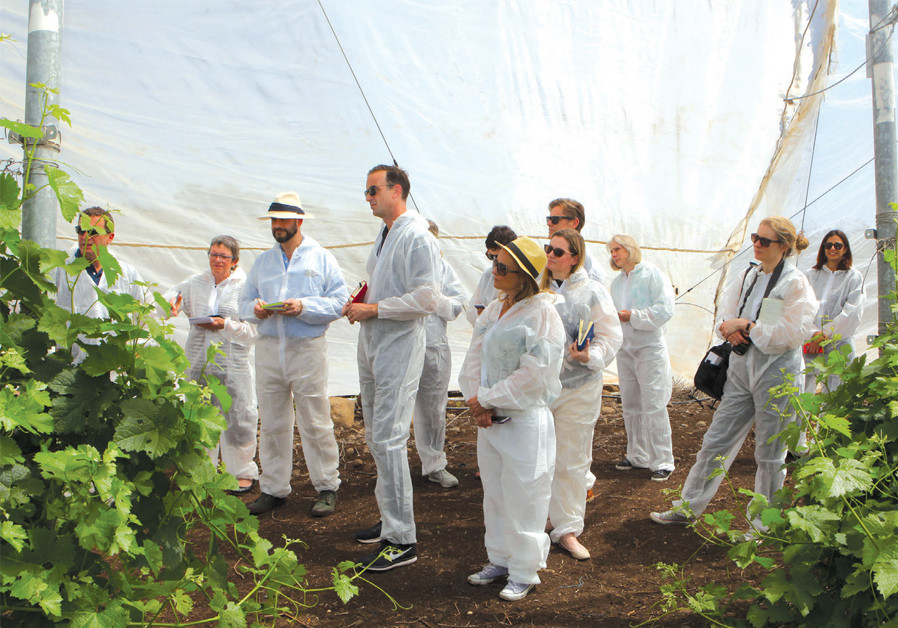 THE MASTERS of Wine visit the Golan Heights propagation block and nursery. (Credit: DAVID SILBERMAN)
