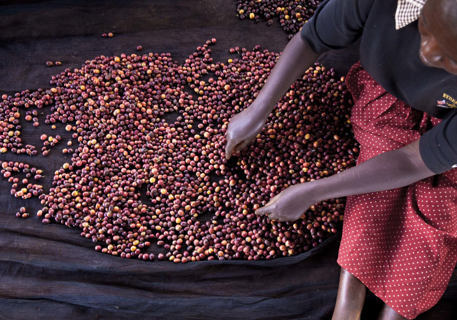 A farmer sifts cocoa beans in Ivory Coast