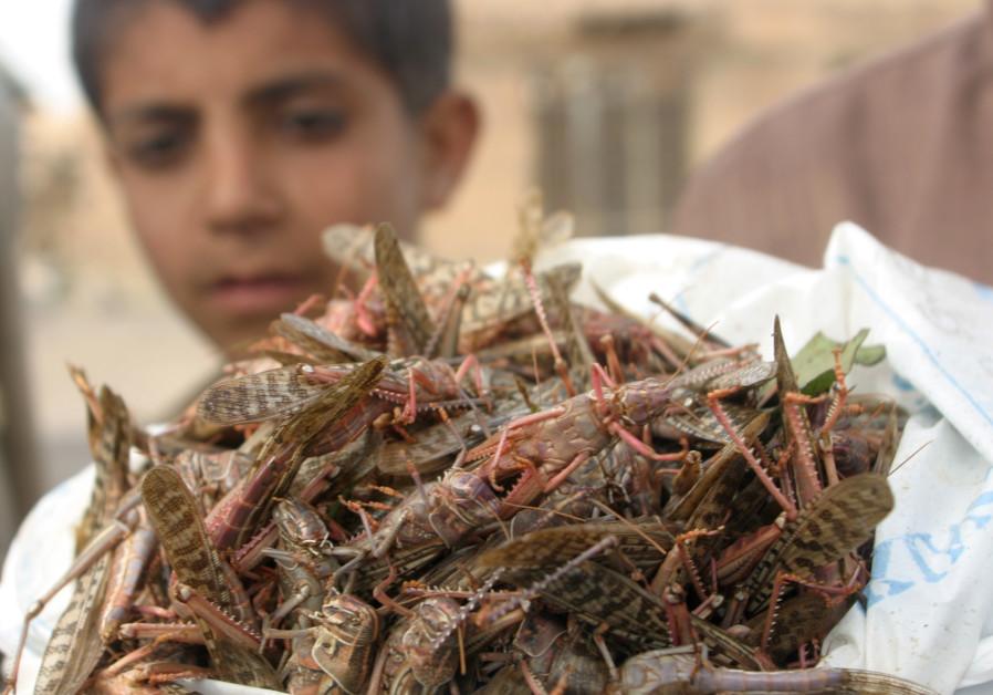 A boy holds a bag filled with locusts he caught near Radaa, Yemen Sept. 2007
