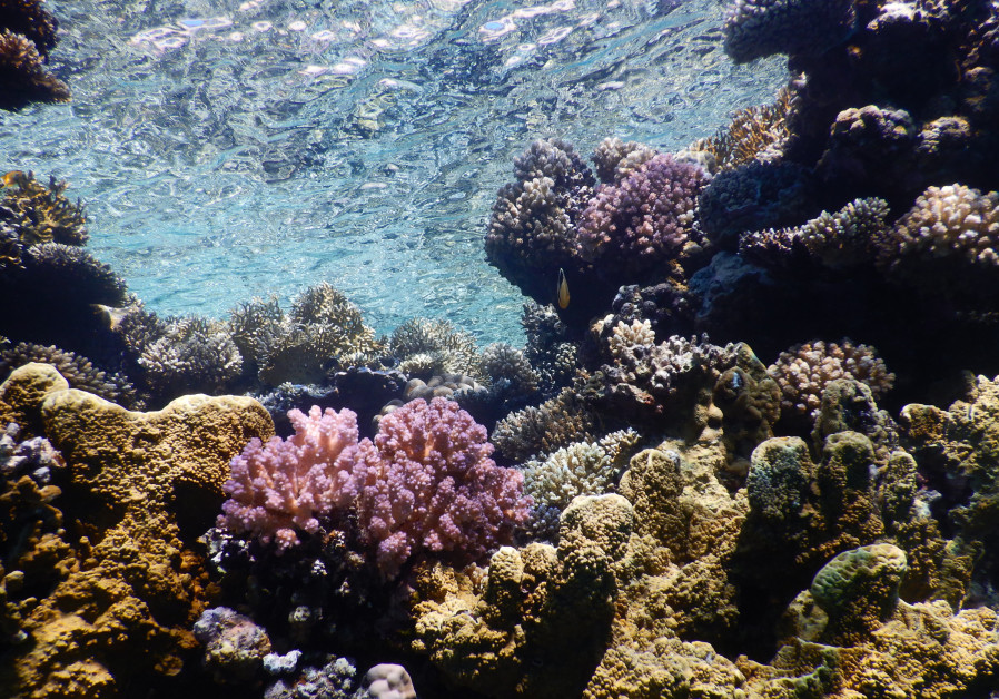 Photo of Red Sea corals