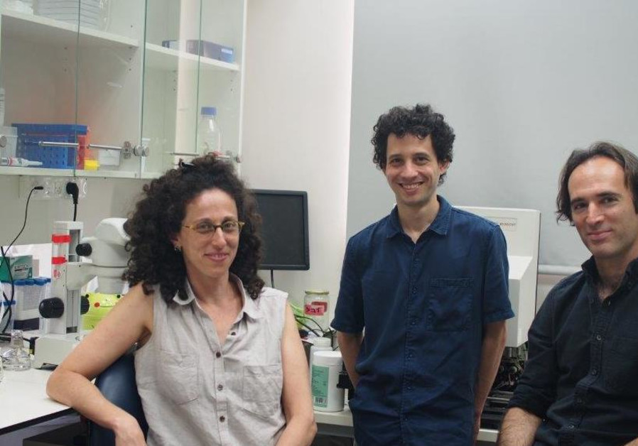 Israeli study: Nervous system can transmit messages to future generations