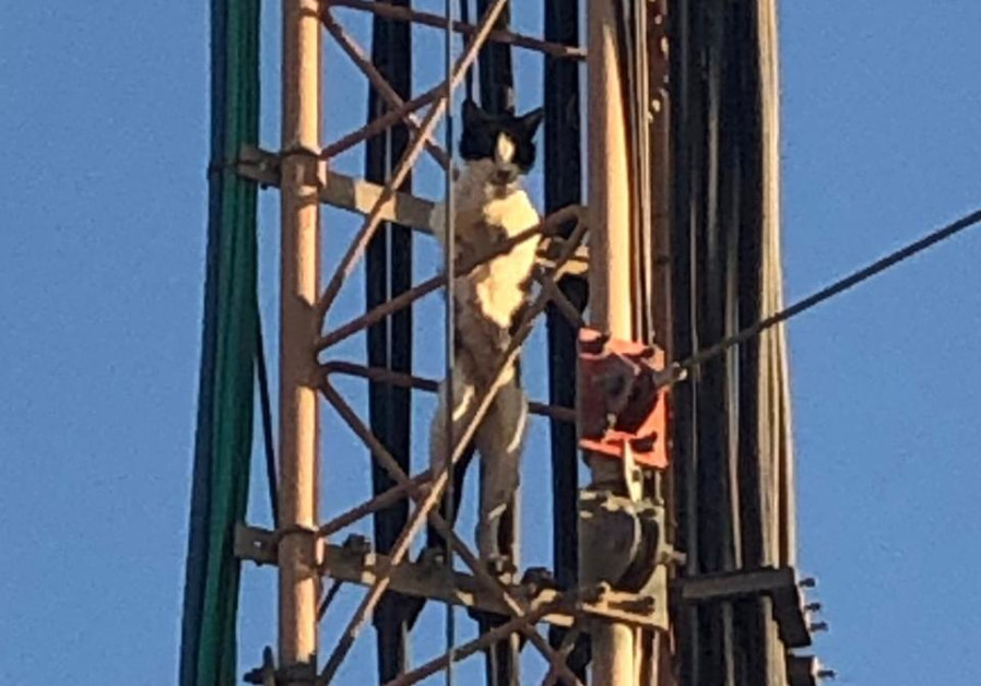 Meow! Bedouins call rescue service, save feline stuck on antenna