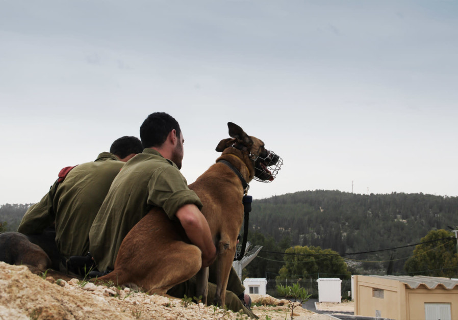 Soldiers in the IDF's Oketz unit hugging a dog during a break, photo taken by Topaz Luk from the IDF