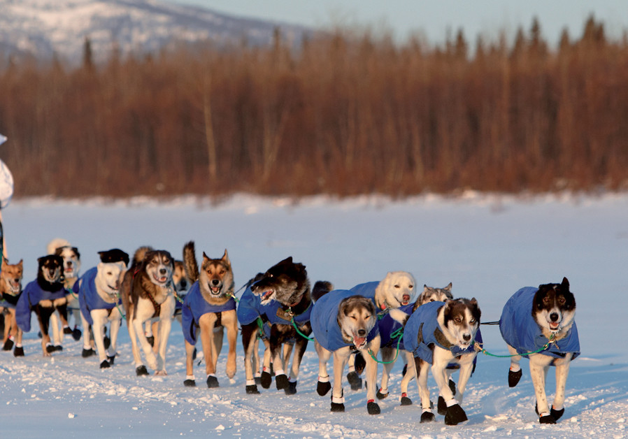 A Window to the World: Jews and sled dogs
