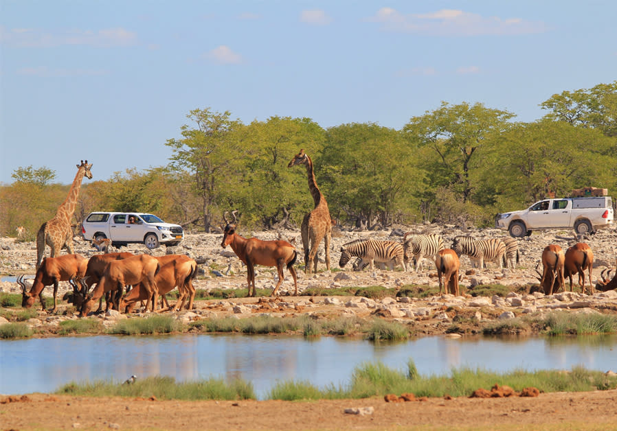 The Best Luxury & Ethical Tourism Safari Spots in Africa