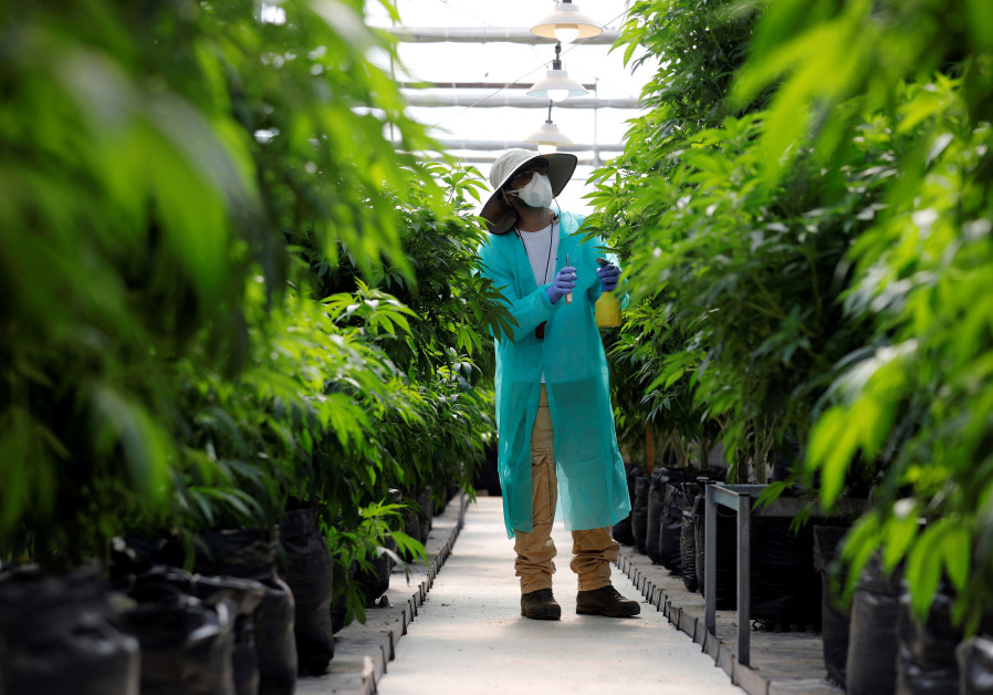 Unnamed Chinese firm invests in Israeli medical cannabis company