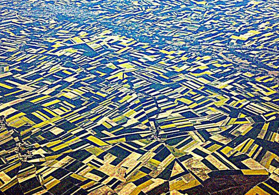 Mustard fields of Dijon (Credit: Tomer Zadok)
