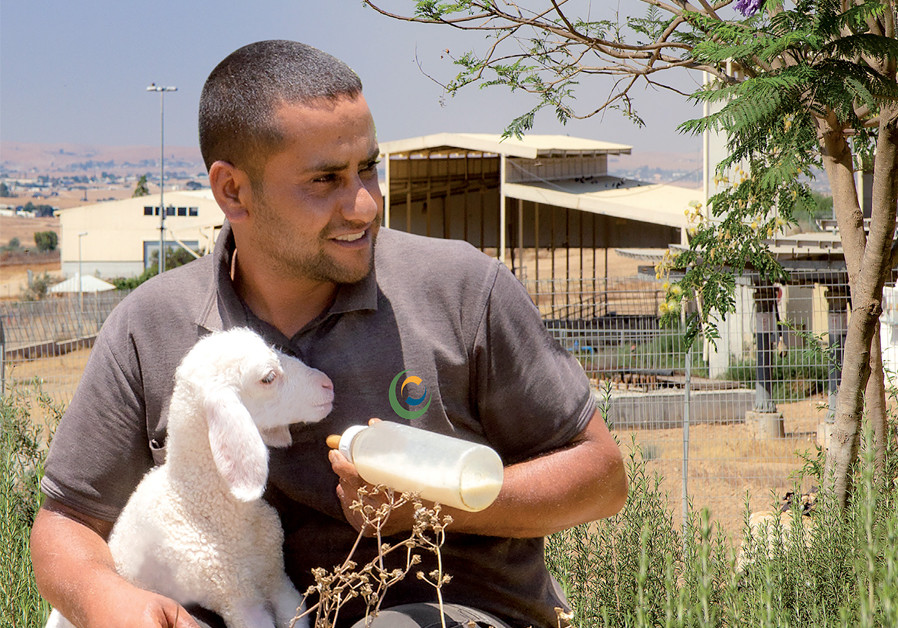 A Bedouin eco-farm celebrates a decade of sustainability