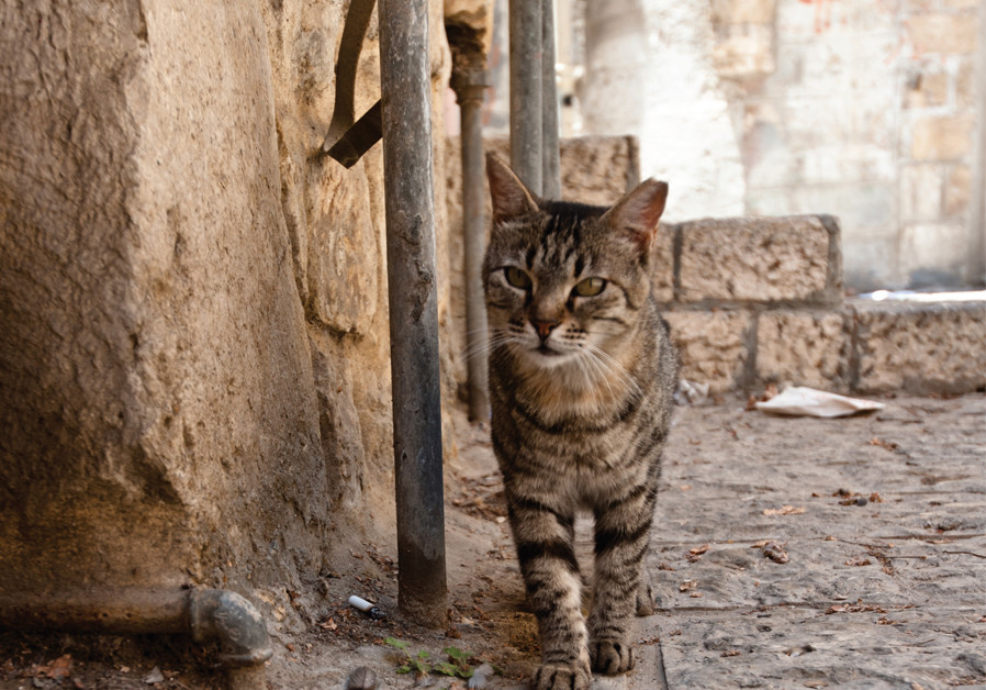 Cats of Jerusalem have a purr-fect holiday