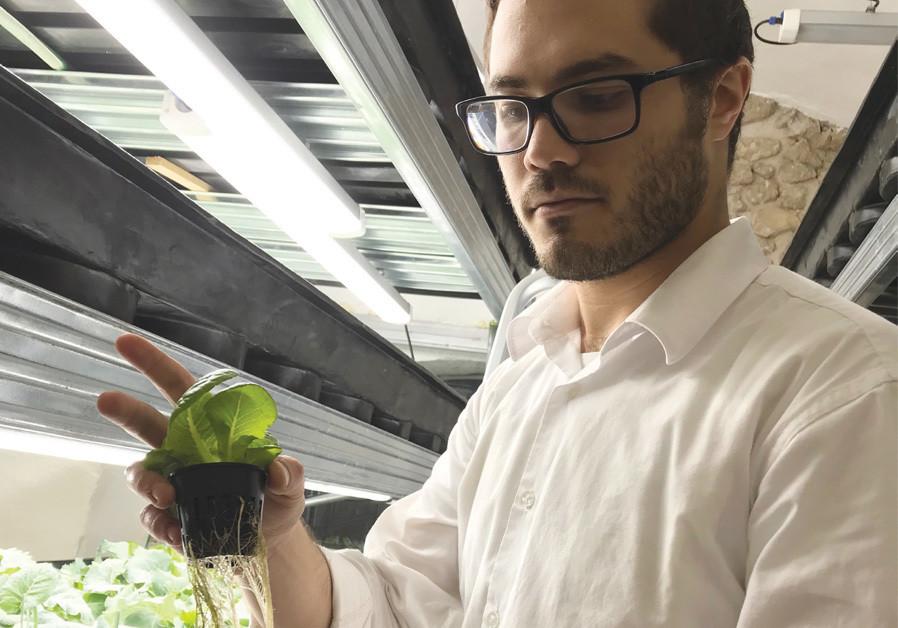 Haredi hydroponics