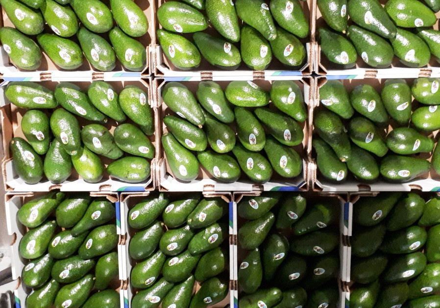 Green Gold, Israeli innovation to solve world avocado needs