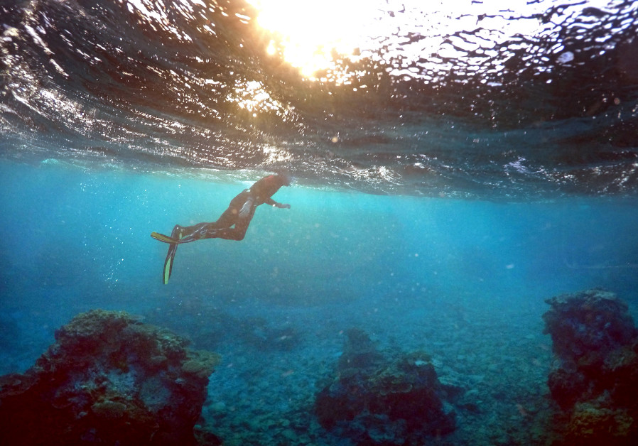 Israeli researchers use 3D printing technology to help restore coral reefs