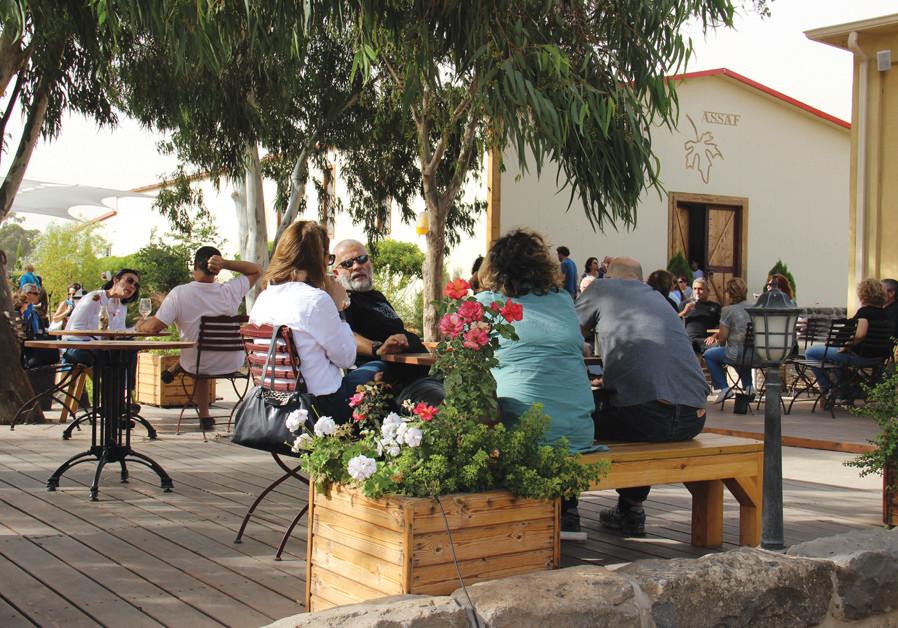 Wine Talk: The Golan wine experience
