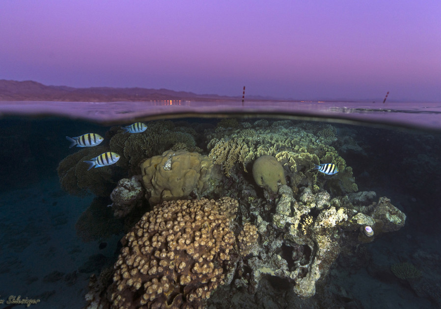 Breakdown in spawning synchrony places corals at 'risk of extinction'