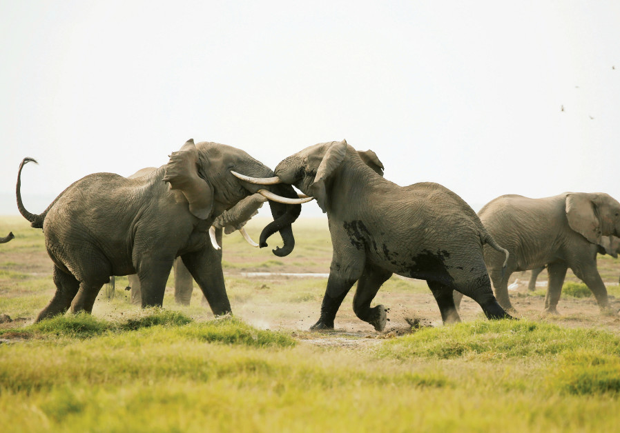 Elephants. Illustrative.