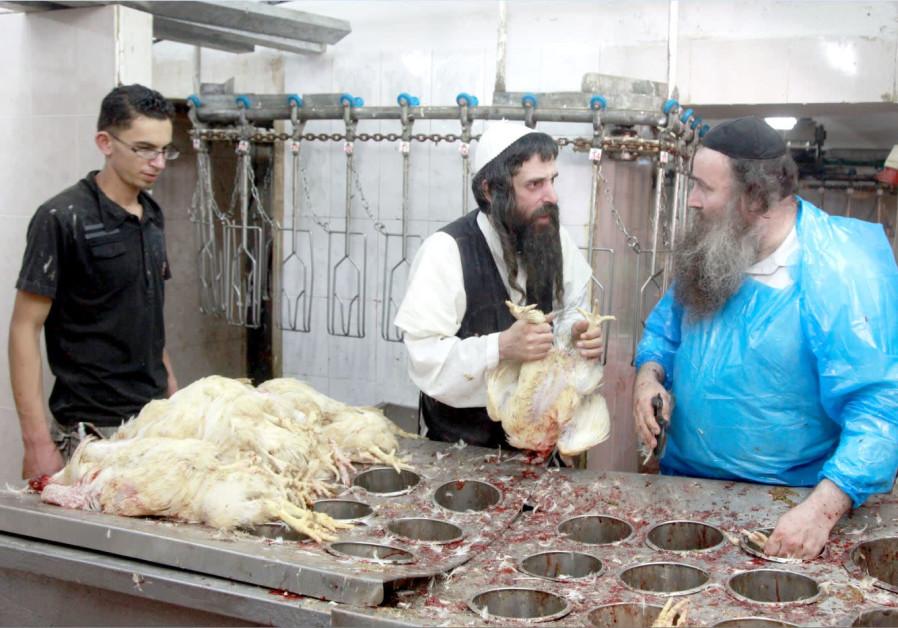 Sukkot: Fauna and frailty