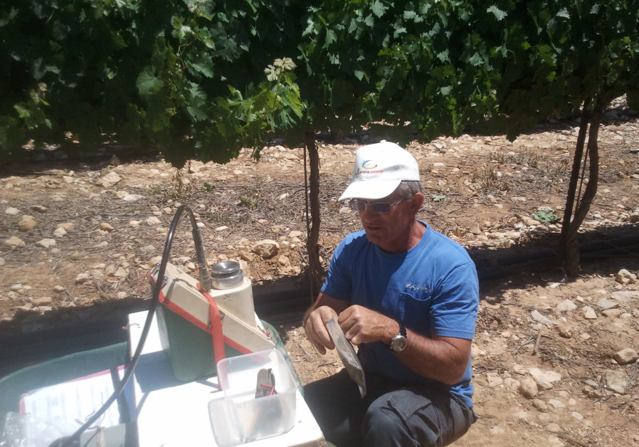 ERAN HARCAVI is happiest working in his vineyards. (Eran Harcavi)