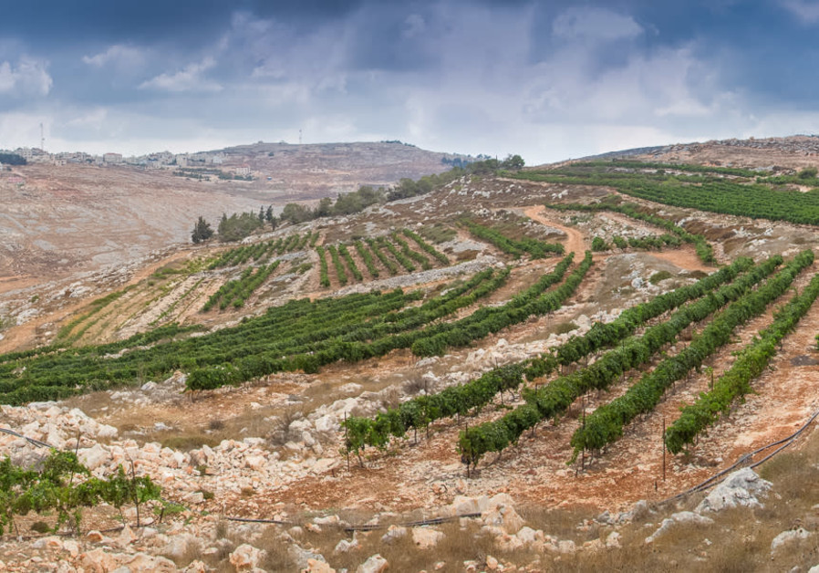 THE HAR Bracha vineyard in the Shomron Hills, one of the areas Harcavi was pleased to help develop. (Har Bracha Winery)