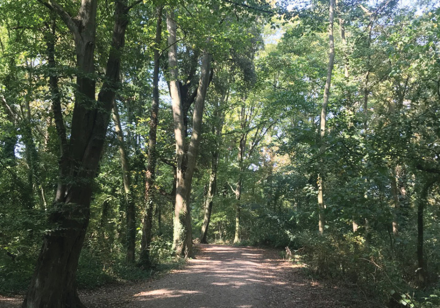 THE JAPANESE practice of forest bathing can reset stress levels. On her recent UK trip, the writer loved walking through the local woods in her mum's town. (Pictured: Wood in Parkfields and Allum Lane Spinney, Hertfordshire; Natalie Blenford)