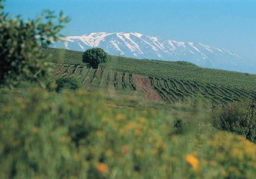 The High-Elevation Golan Heights Winery vineyards, against the backdrop of Mount Hermon (Golan Heights Winery)
