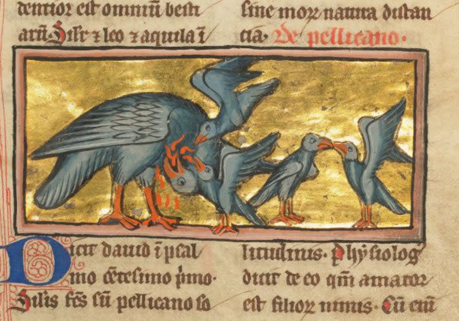 Pelican feeding her own blood to her young, as depicted in a late 13th century French manuscript. (Photo credit: Getty Center/Public Domain)