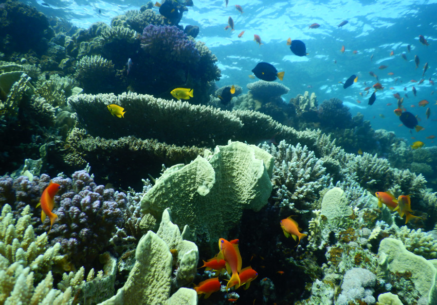 The oil spill could have a major impact on the Red Sea's ecosystem (Credit: Prof. Maoz Fine)