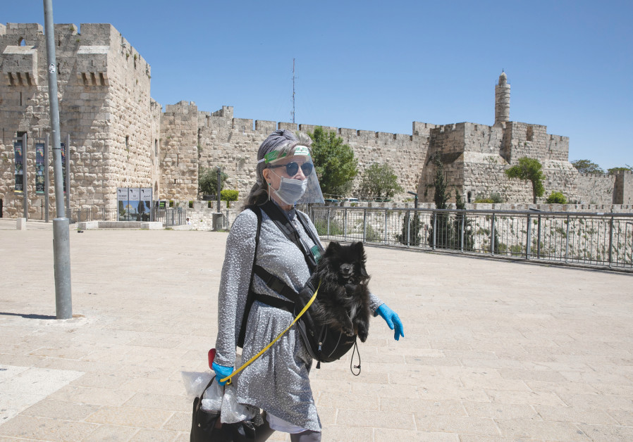 GIVING A pooch a walk and a lift outside the Old City's Jaffa Gate in May. (Photo credit: Olivier Fitoussi/Flash90)
