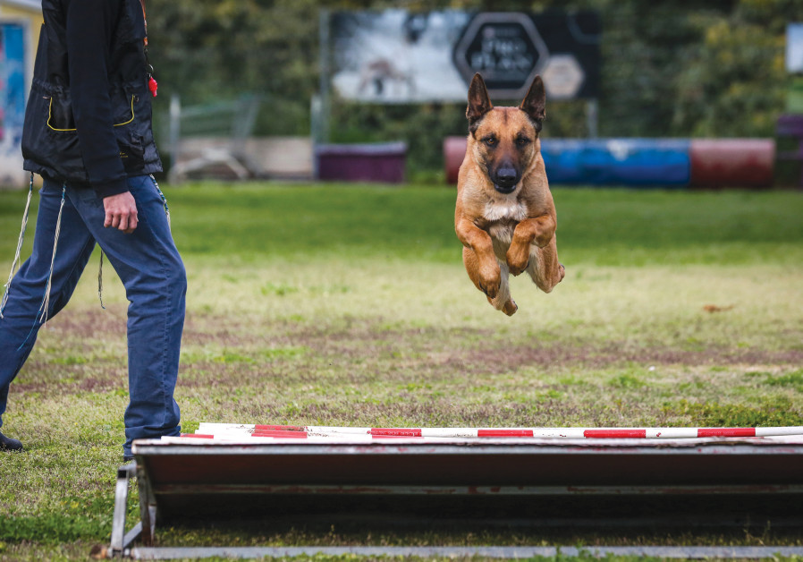 THIS IS an ideal time to work on training your dog. (Photo credit: David Cohen)