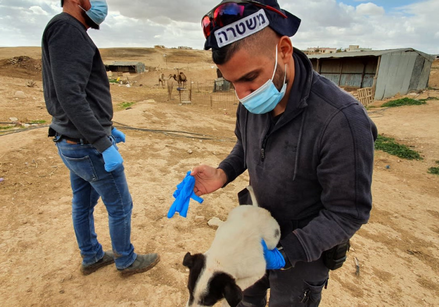 Israel Police recovers a puppy that was abused by residents of Kuseifa in southern Israel, Monday, January 18, 2020. (POLICE SPOKESPERSON'S UNIT)