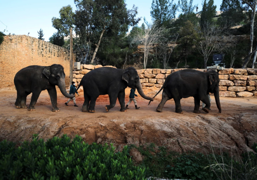 Elephants from the Biblical Zoo of Jerusalem. (Credit: Reuters)