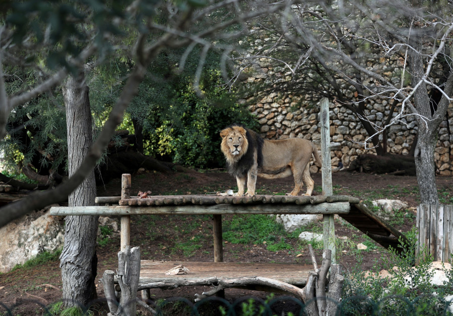 The Biblical Zoo in Jerusalem which is closed due to the coronavirus disease (COVID-19) lockdown. (Credit: Reuters)
