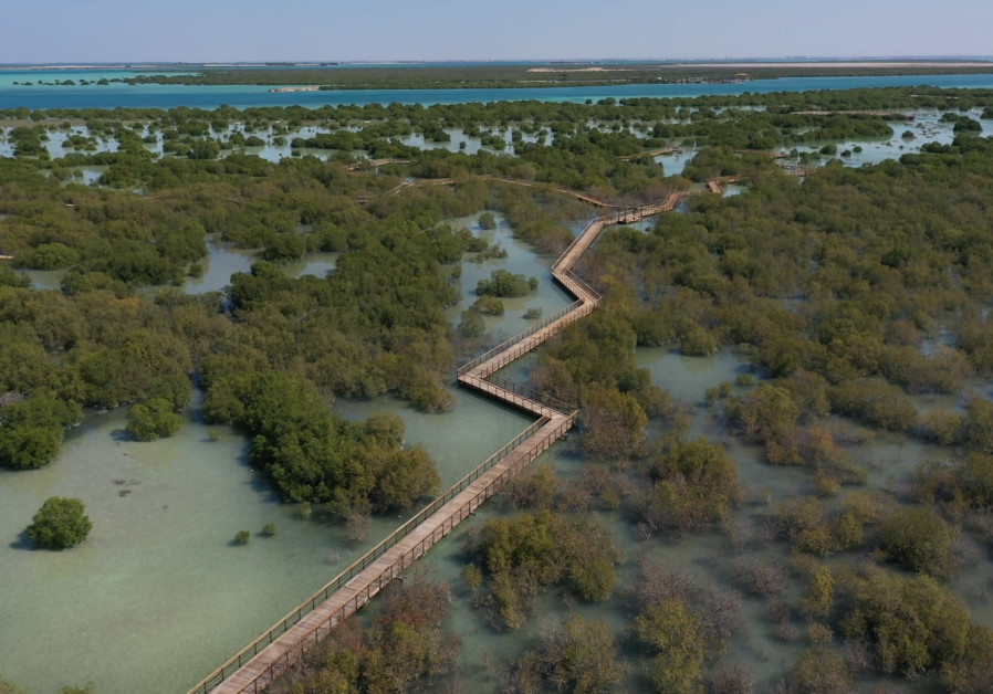 Abu Dhabi's protected mangrove forests are home to a wealth of wildlife (Photos: Abu Dhabi Media Office)