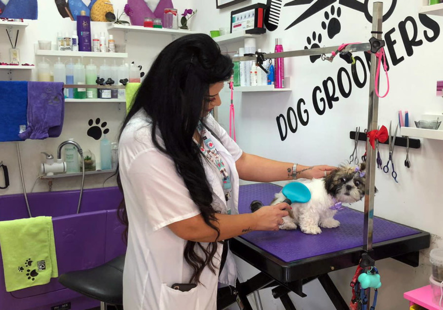 COVID-19 made Arab Israeli hairdresser switch customers from humans to dogs
