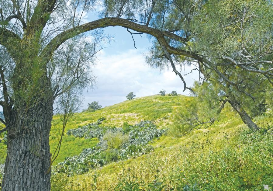 Taman Nasional Tel Tzafit (Sumber: Itzik Marom)