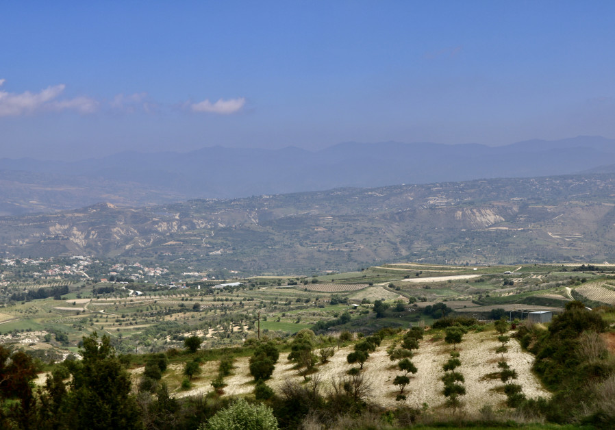 Cyprus vineyard (Photo credit: Hadassah Brenner).