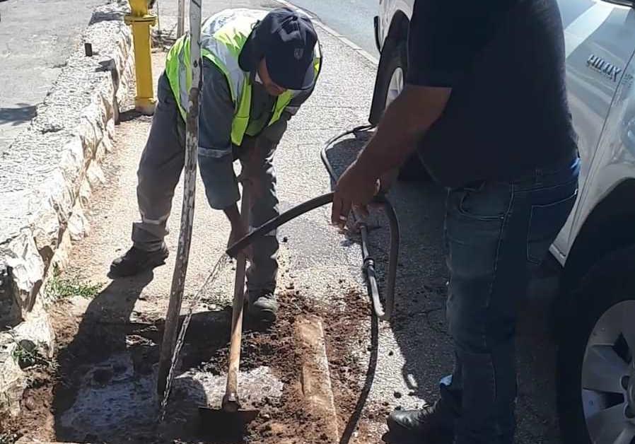 'EYTZALAH' MEN – hatzalah (rescuers) for trees – have arrived! (Credit:Natan Rothstein)