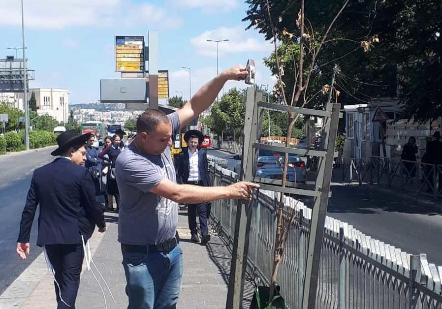 PASSERSBY WATCH as Rafi installs a metal tree guard. '(Credit: Natan Rothstein).