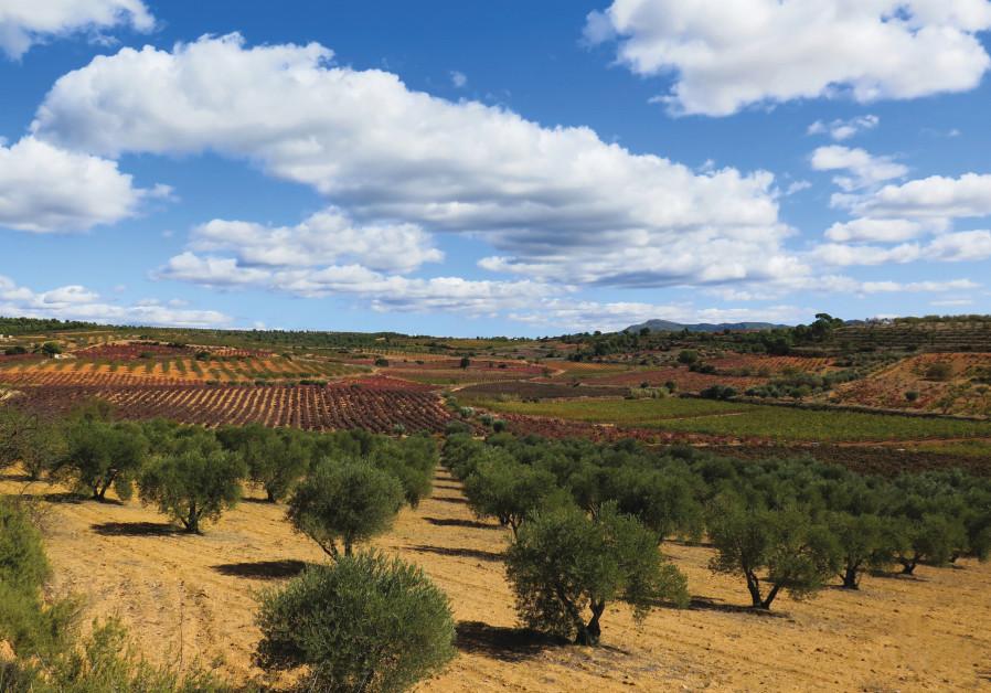 THE UTIEL-REQUENA wine region is 70km from Valencia