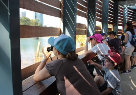 Children engage in birdwatching at Rosh Tzippor